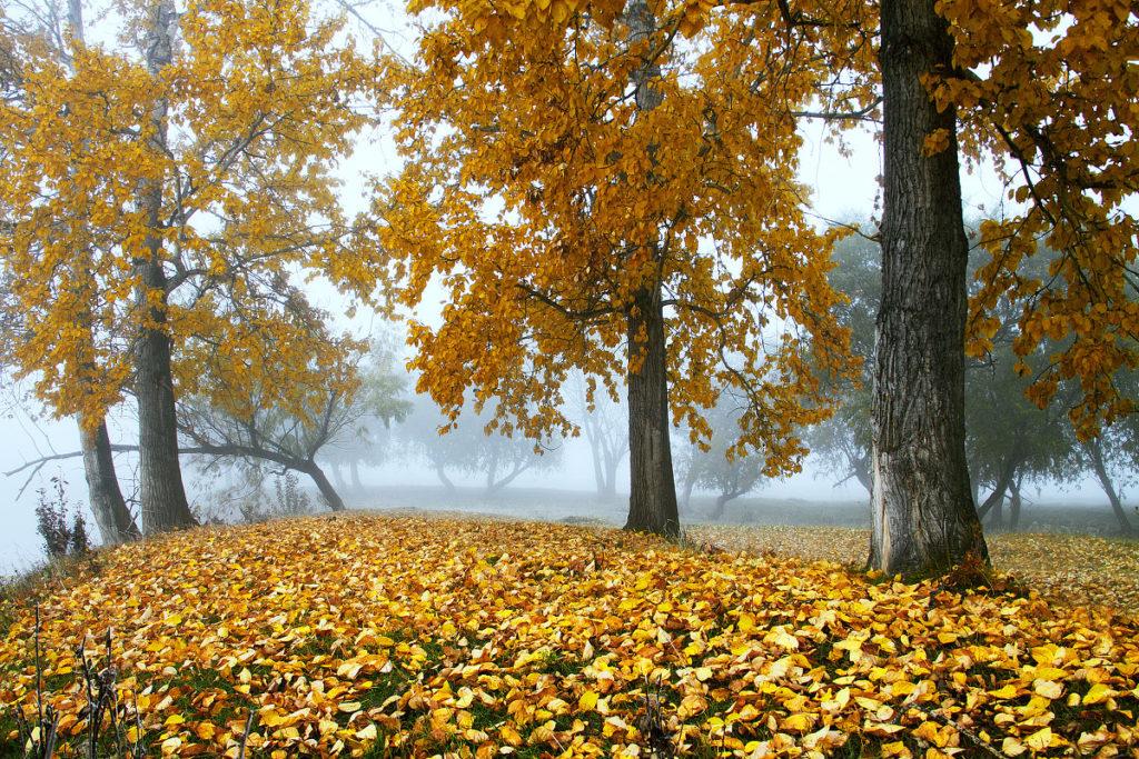 Картинки с изображением осени в сентябре, поздравлениями день
